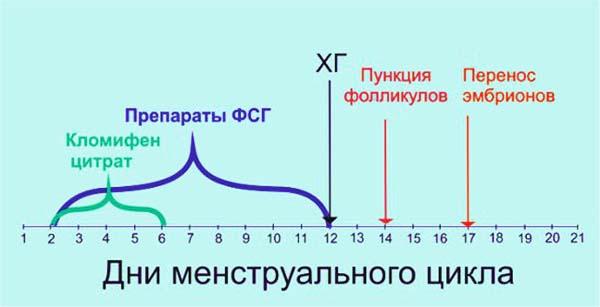 Протоколы ЭКО