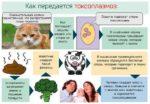 Как выявить и вылечить токсоплазмоз